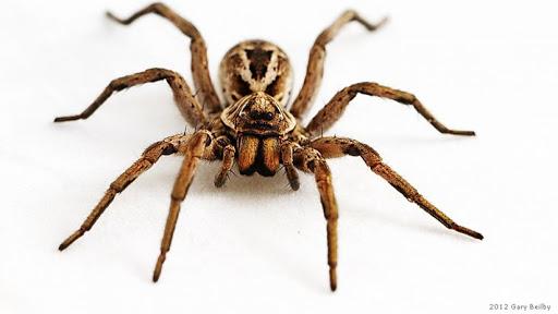 örümcek ilaçlaması, örümcek ilaçlaması yapımı, örümcek nasıl ilaçlanır